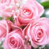 敬老の日に贈る花の種類は?花言葉が長生きの花も合わせて紹介
